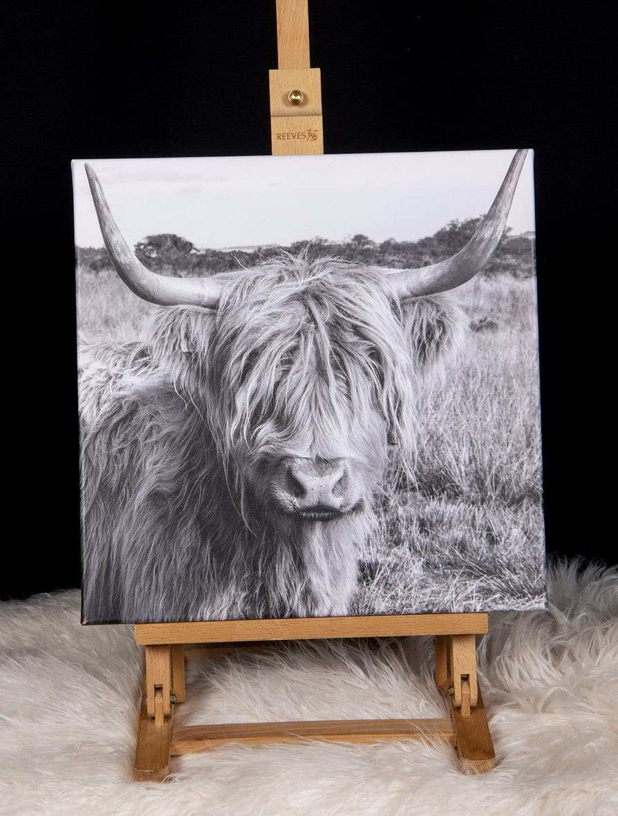 Highland Cow canvas picture.